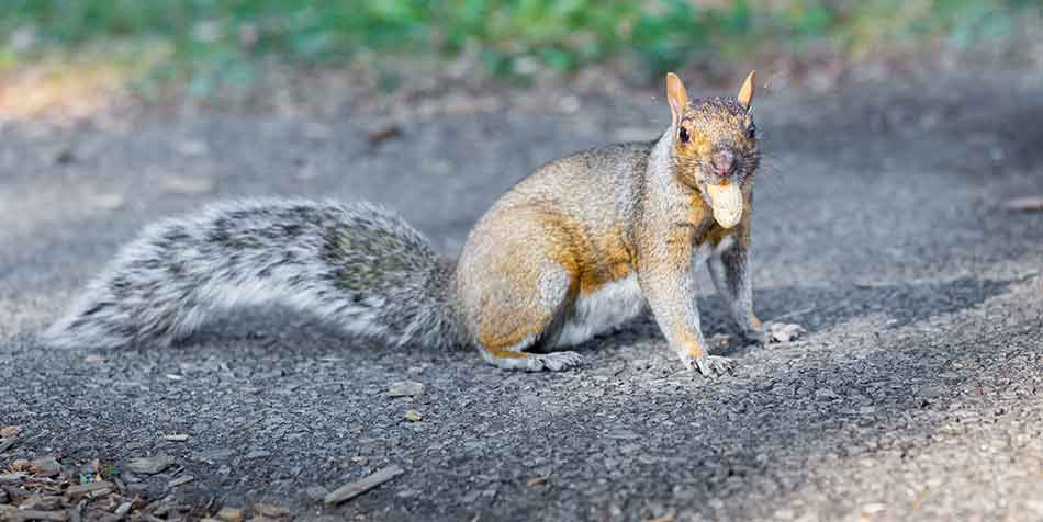 3 Of The Best Nuts For Squirrels And Where To Get Them