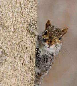 female squirrel names