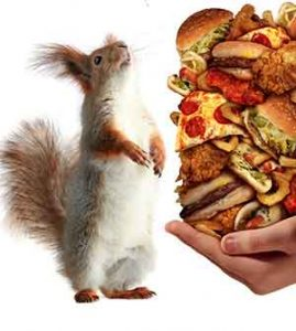 foods to never feed squirrels