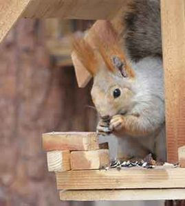 get a squirrel feeder