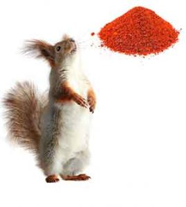 how to keep squirrels out of bird feeder using cayenne pepper