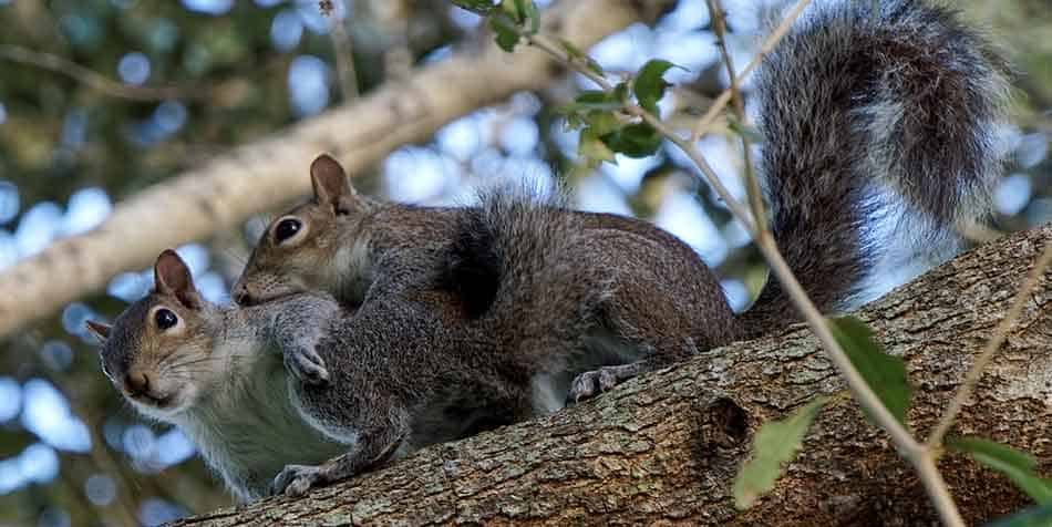 43 Squirrel Names That You Will Love and Will Amaze You