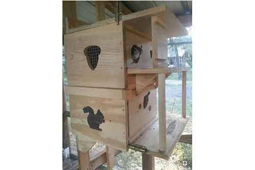 custom squirrel houses