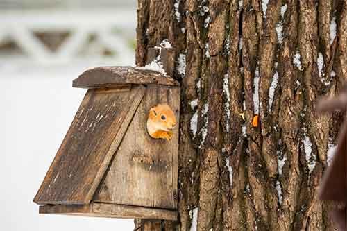 squirrel den plans