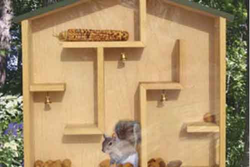 squirrel house plans