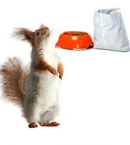 squirrels eat cat food