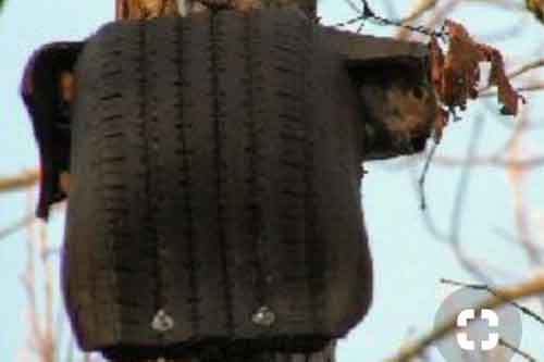 tire squirrel house