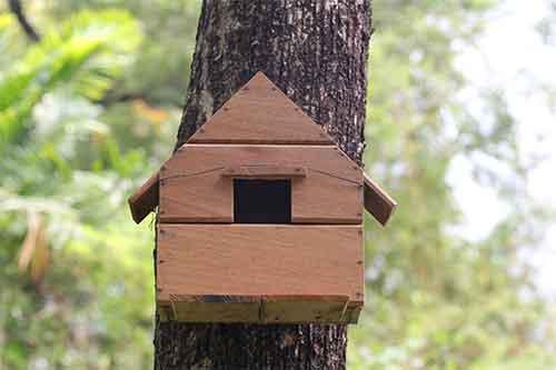 wooden squirrel house design