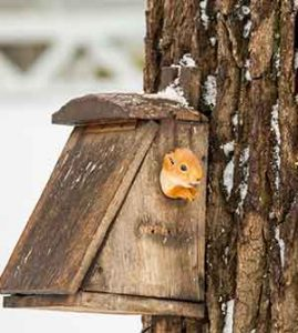 squirrel homes