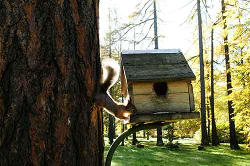 DIY House for Squirrels
