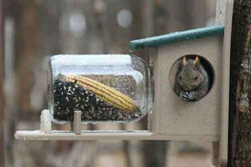 recycled jar squirrel feeder and house