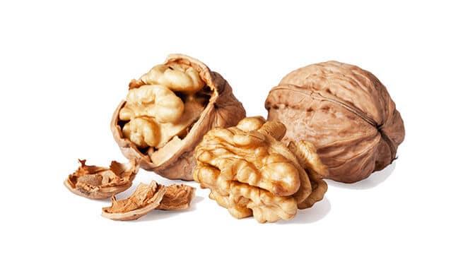 do squirrels like walnuts