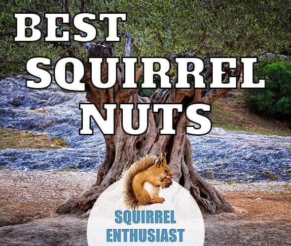 best nuts for squirrels