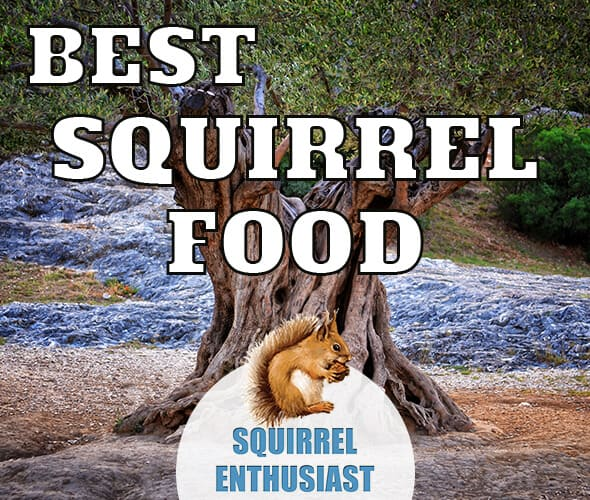best squirrel food