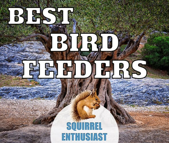 best squirrel proof bird feeders