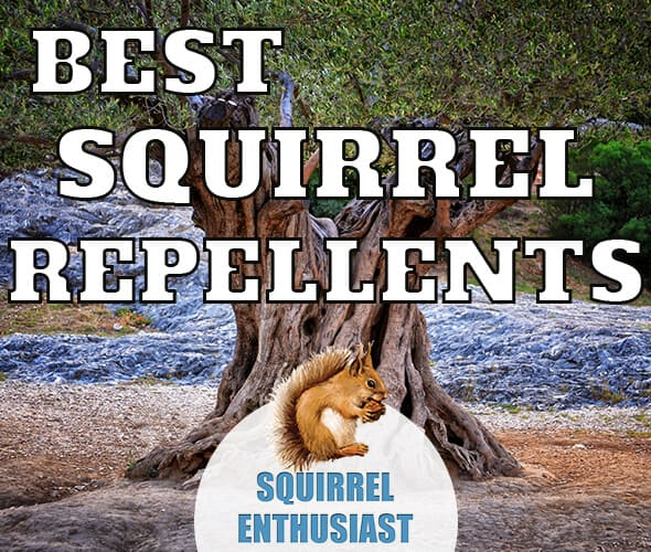 best squirrel repellents