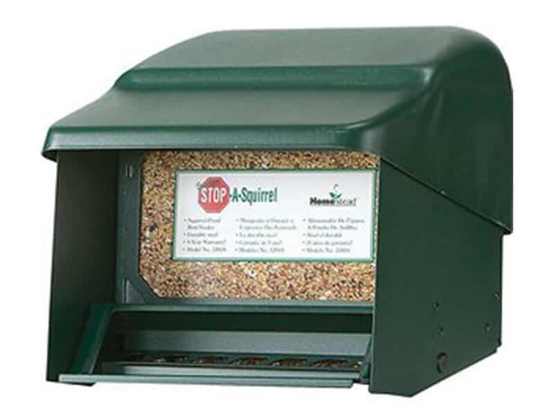 bird & squirrel feeder sale