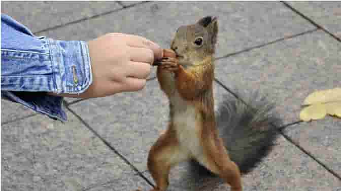 can you feed salted peanuts to squirrels