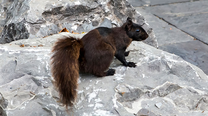 do squirrels raid bird nests