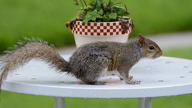 how do I stop squirrels from digging in flower pots