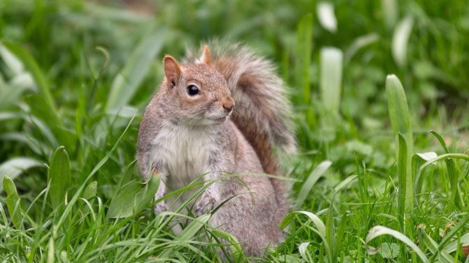 squirrels eat birds