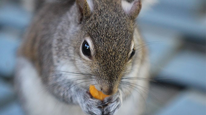 will squirrels eat crackers