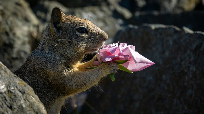 do squirrels eat azaleas