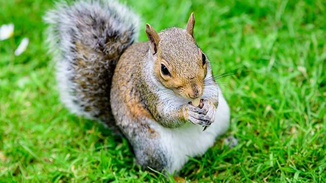 cute squirrel names with an s