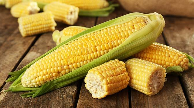 is corn safe for squirrels