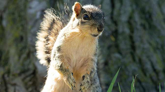 why are squirrels so jumpy