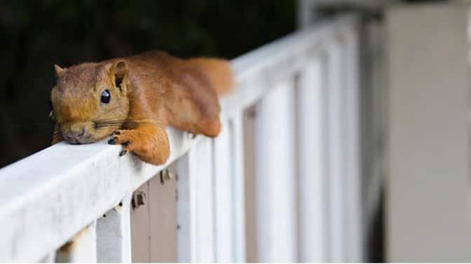 do squirrels like bananas