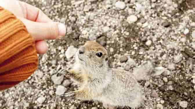 squirrels eat bananas