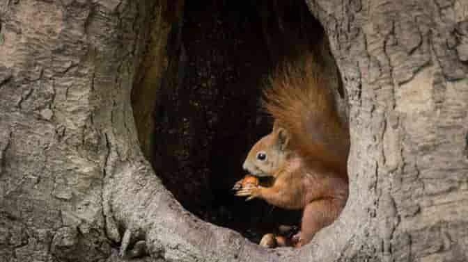 trees squirrels love